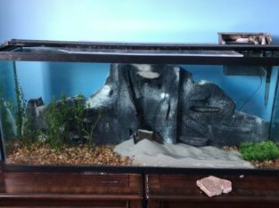 Multiple Fish tanks