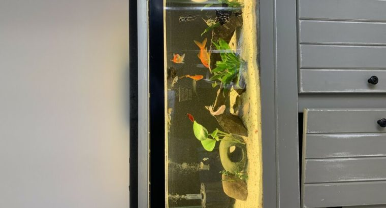 Wanted: 45gallon fish tank with stand