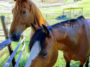 Wanted: Pasture/field to lease long term