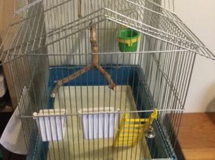 Reduced birdcage