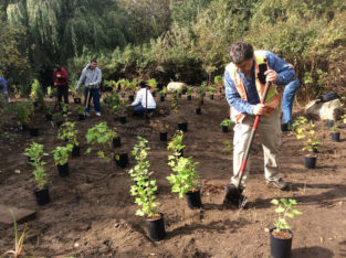Volunteer planting event at Trout Lake