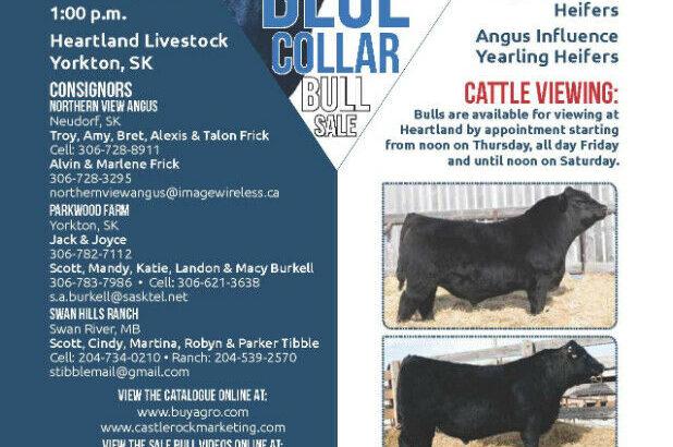 Blue Collar Bull Sale