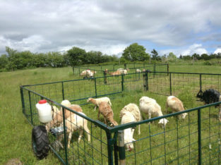 Movable fencing pen, perfect for sheep, goats, pigs or dogs