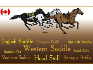 Western Horse Saddle and Tack