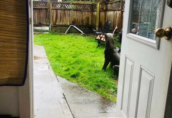 2BR BRIGHT Garden Suite – 2wks – 12 months.