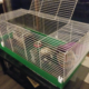 Bunny cage and supplies