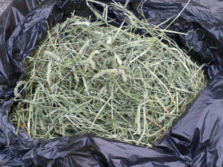 TIMOTHY HAY $1 CHEAP Fresh Cut Timothy Hay FREE DELIVERY