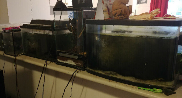 Terra and Aquariums with Supplies $300 OBO