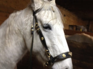 Western Saddle New All Tack ! New Verity !