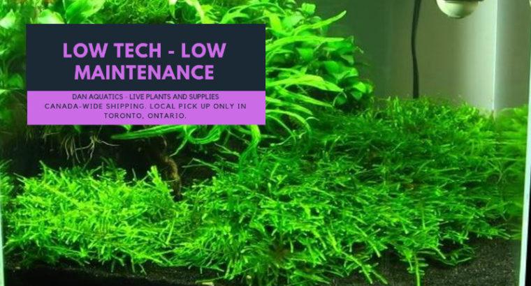 Beginner Live Plants and Aquatic Supplies!!