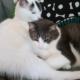 2 brothers needing a good home