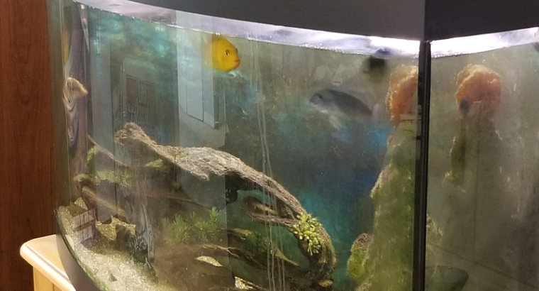 Aquarium For Sale ( Fish tank )