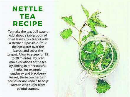 Boost your immune system naturally! Fresh Stinging Nettle