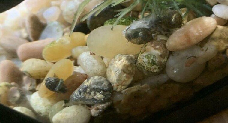Snail Baby's!
