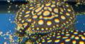 Asian arowana for sale or pre-sale