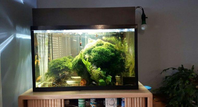 Beautiful Aquarium Moss