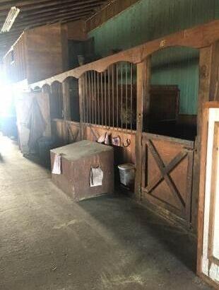 Full Horse Board