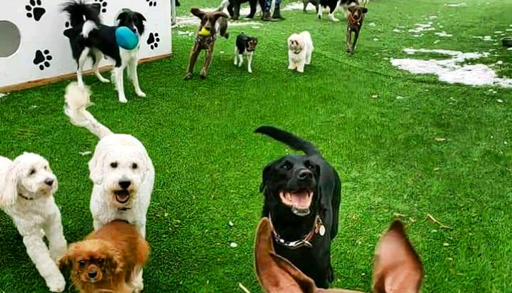 Pet Sitting-The People's #1 Choice. Doggy Daycare & Boarding.