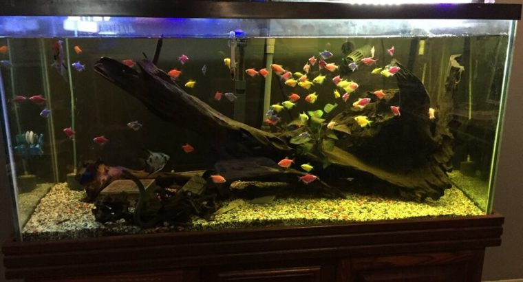 90 gallon aquarium