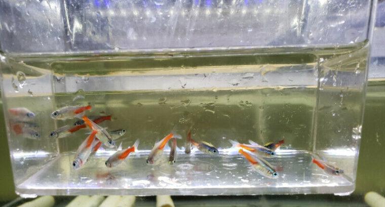 Aquatic Fish