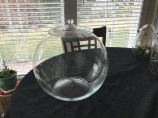 Large bowl terrarium