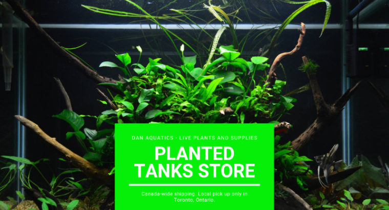 Low Light Low Tech Easy Aquarium Plants and More!!