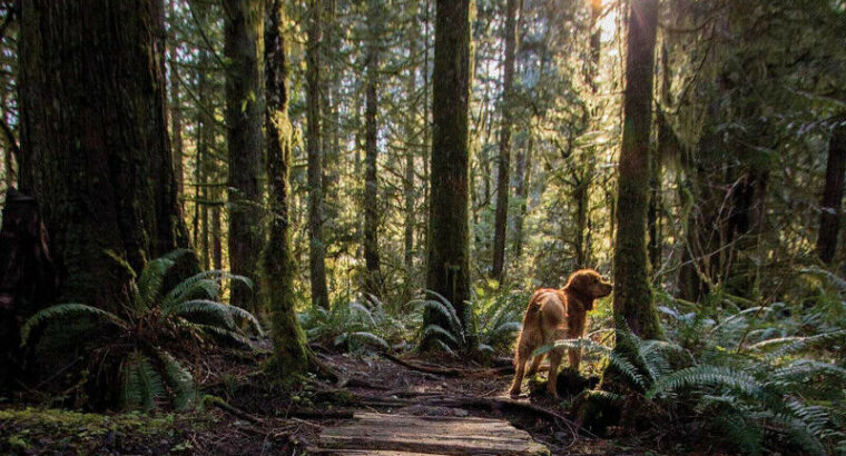 Help save the forest in Cumberland, BC!