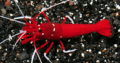 Wanted: ISO blood red fire shrimp