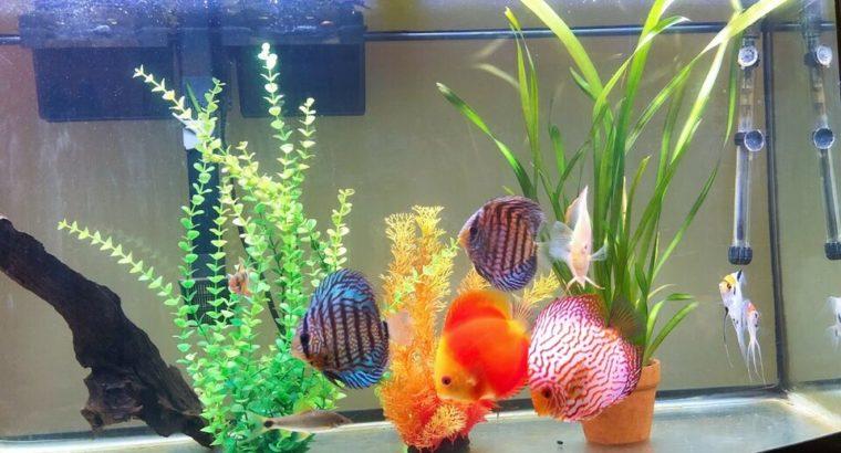 JC&P Aquarium Led Light Remote Control RGB colors sizes