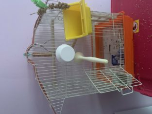 Small love bird cage with toys,bowls and swings.