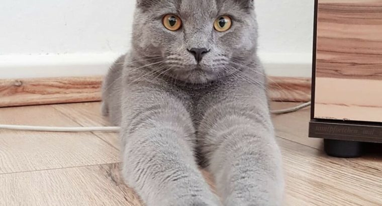 Wanted: I'm looking for a cat or kitty like this picture for adopt