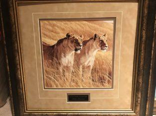 AFRICAN AMBER – LIONESS PAIR by Robert Bateman