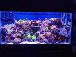 90-gallon reef aquarium