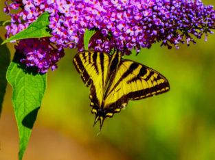 Backyard Pollinators (Online Webinar)