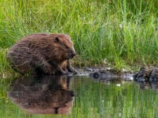 Busy Beavers (Online Webinar)