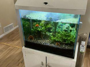 Fully Set Up Aquarium / Fish Tank
