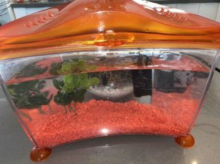 Fish tank kit with 2 guppy fish's