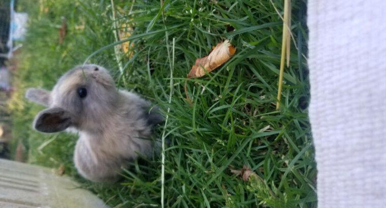 Baby bunnies