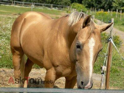 Good jumping horse